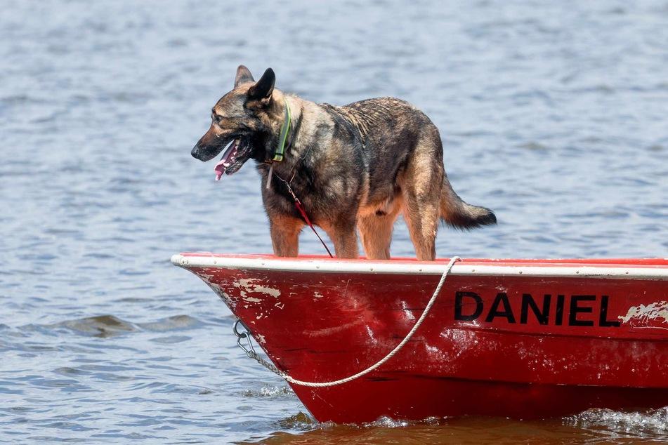 Spürhund Thor sucht auf dem Einfelder See nach einer minderjährigen Schwimmerin, die hier seit dem 18.06.2021 vermisst wird.