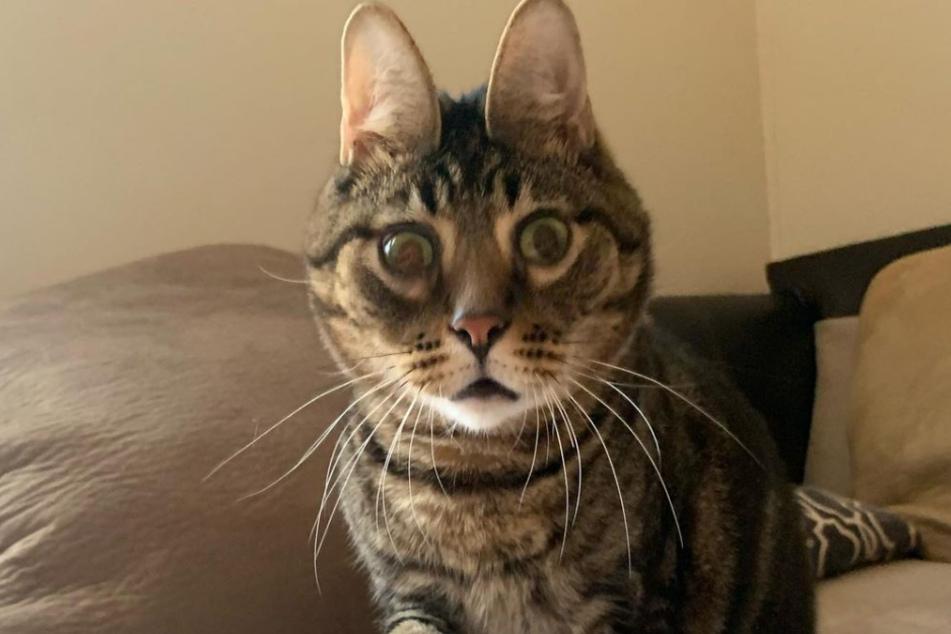 Kater Peanut hat ein außergewöhnliches Gesicht.