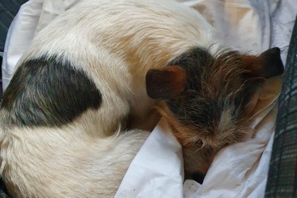 Von mehreren Zügen überrollt: Polizei rettet kleinen Hund aus Gleisen