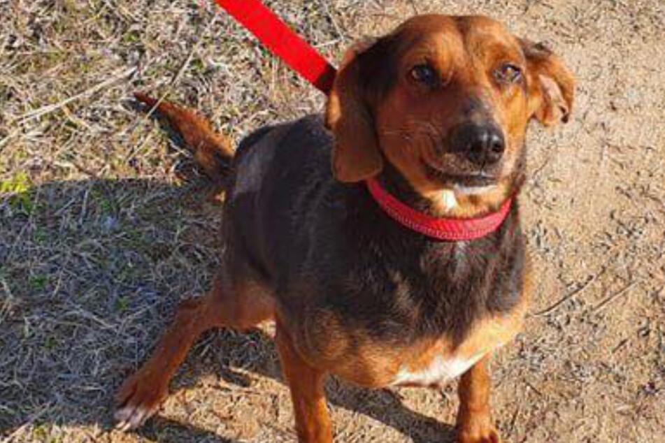 Hunde-Dame Lily überlebte das Tierheim nicht.