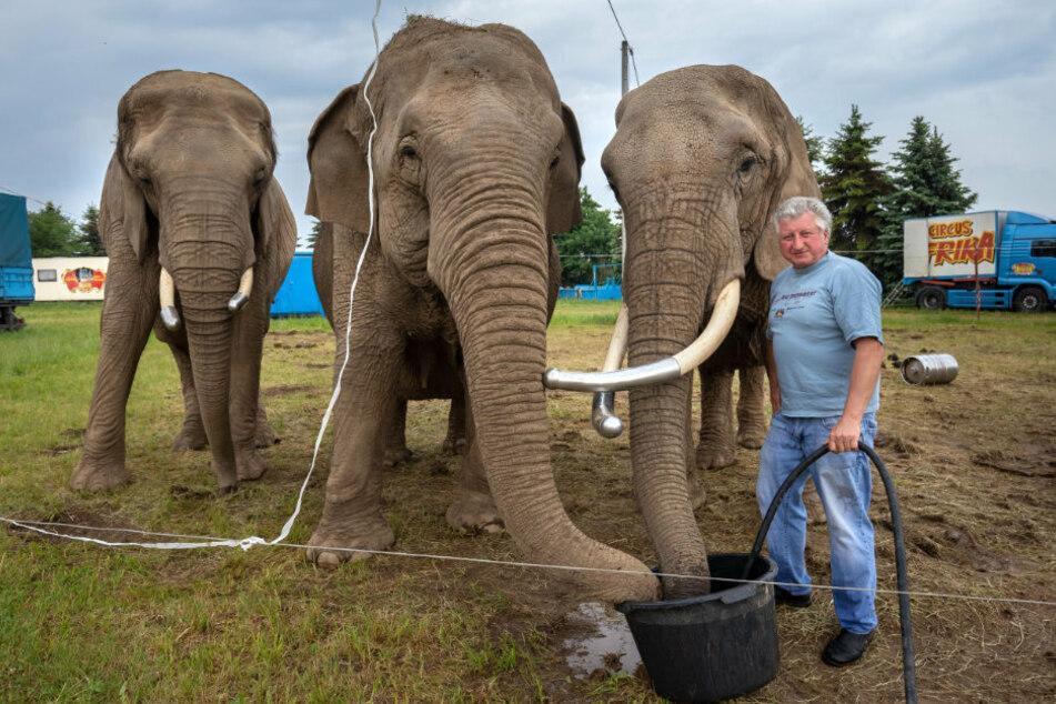 Circus Afrika eröffnet Elefanten-Erlebnispark