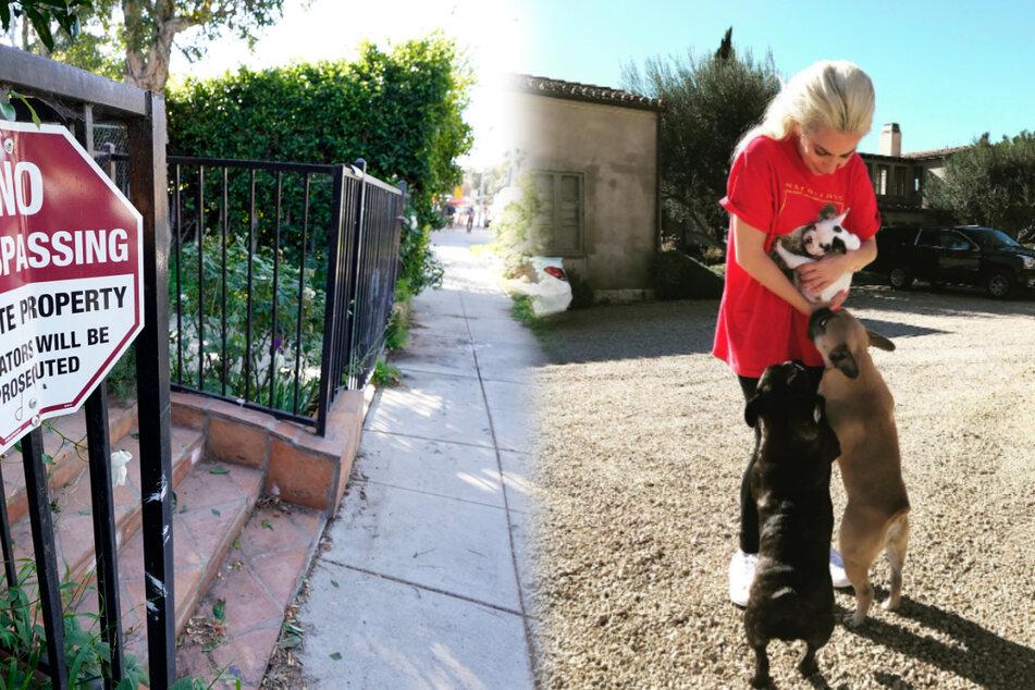 Lady Gaga unter Schock: Hunde der Pop-Sängerin brutal entführt