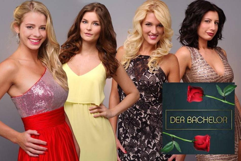 Welches dieser sexy Mädels erobert den Bachelor?