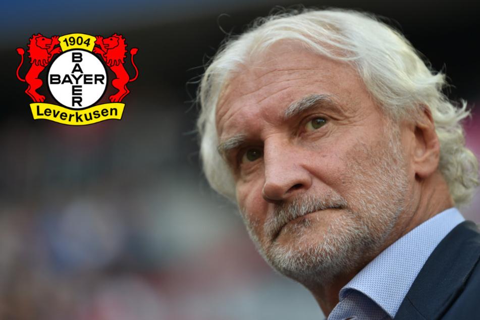 Leverkusen und die Havertz-Millionen: Völler tritt auf die Transfer-Bremse