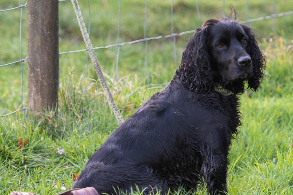 Mann bekommt gestohlenen Hund nach Monaten zurück und erlebt eine faustdicke Überraschung