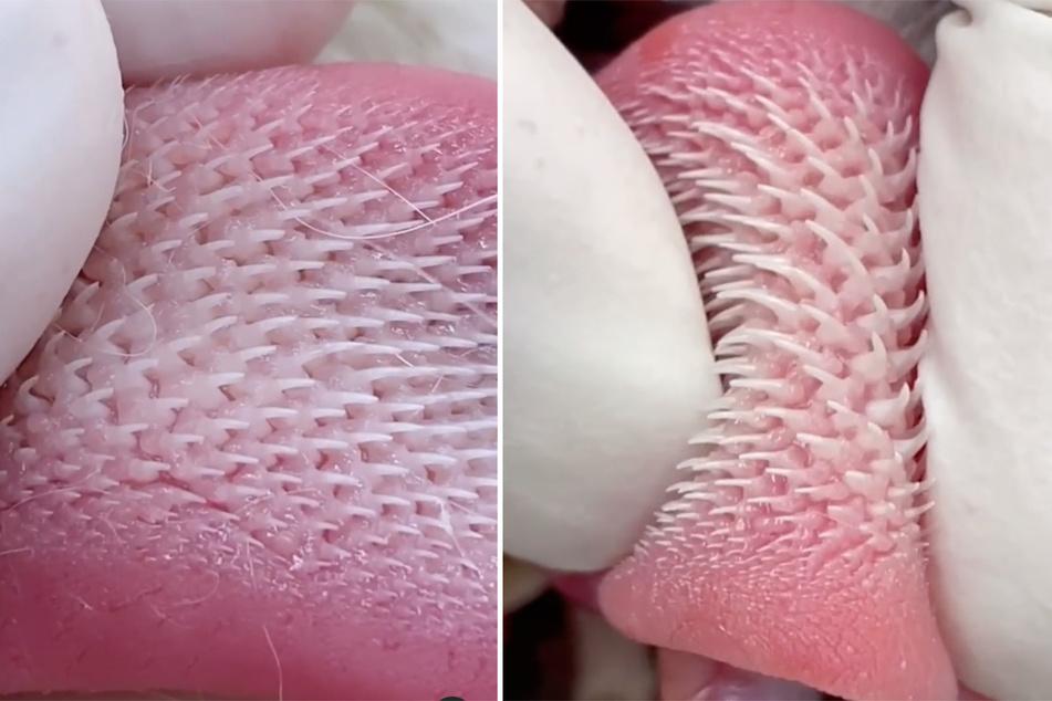 Krallen auf der Zunge: Zu welchem Tier gehört dieses gruselige Körperteil?
