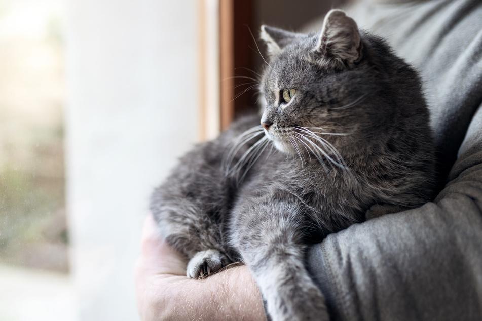 Katze flitzt durch Wohnung und wird damit zur Heldin