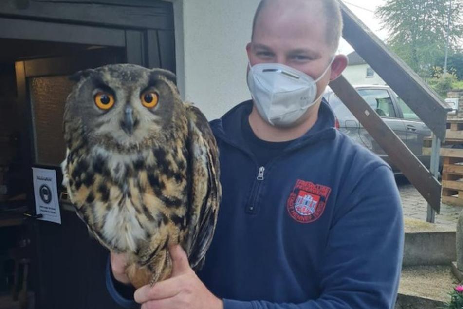 Fabian Herde von der Freiwilligen Feuerwehr mit dem geretteten Uhu. Da der Raubvogel unverletzt war, wurde er wieder ausgesetzt.