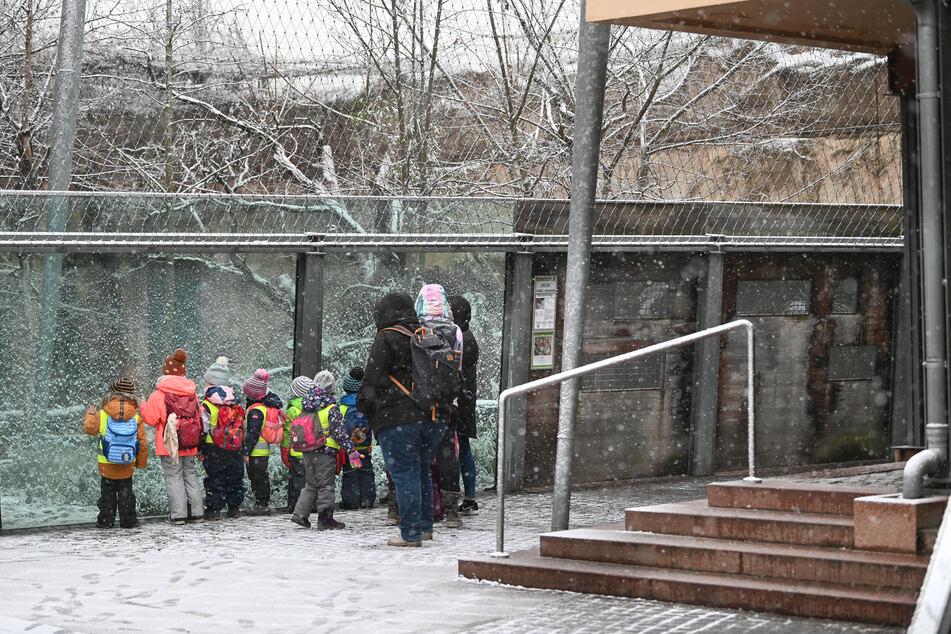 Am Samstag öffnet der Zoo Halle wieder seine Tore für Besucher.