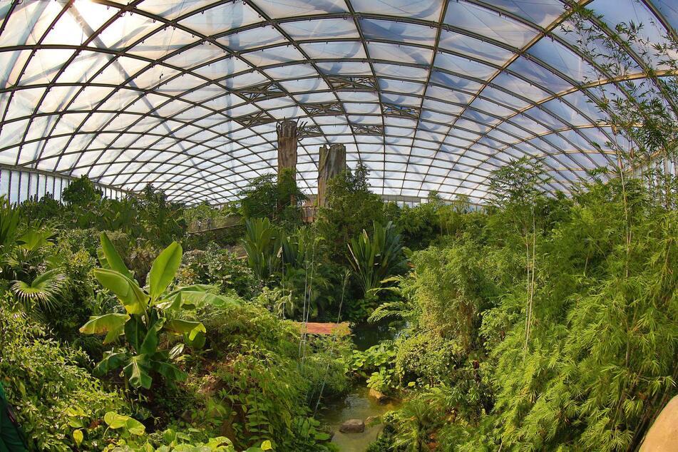 Es dürfen endlich wieder Besucher in die Tropenerlebniswelt Gondwanaland.
