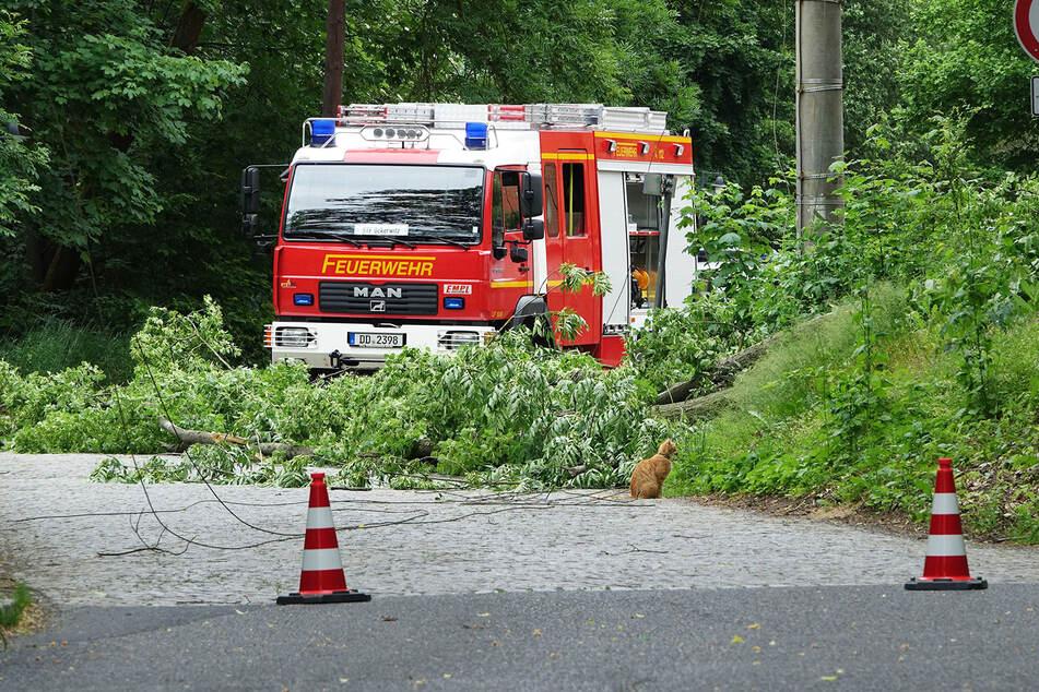 Die Feuerwehr rückte am Nachmittag aus und kümmerte sich um den umgekippten Baum.