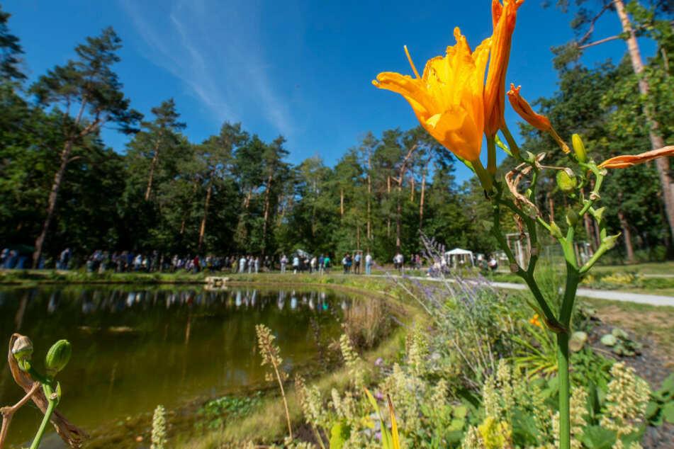 Der Teich im Dresdner Heidefriedhof soll Ruhepol für alle Trauernden sein.