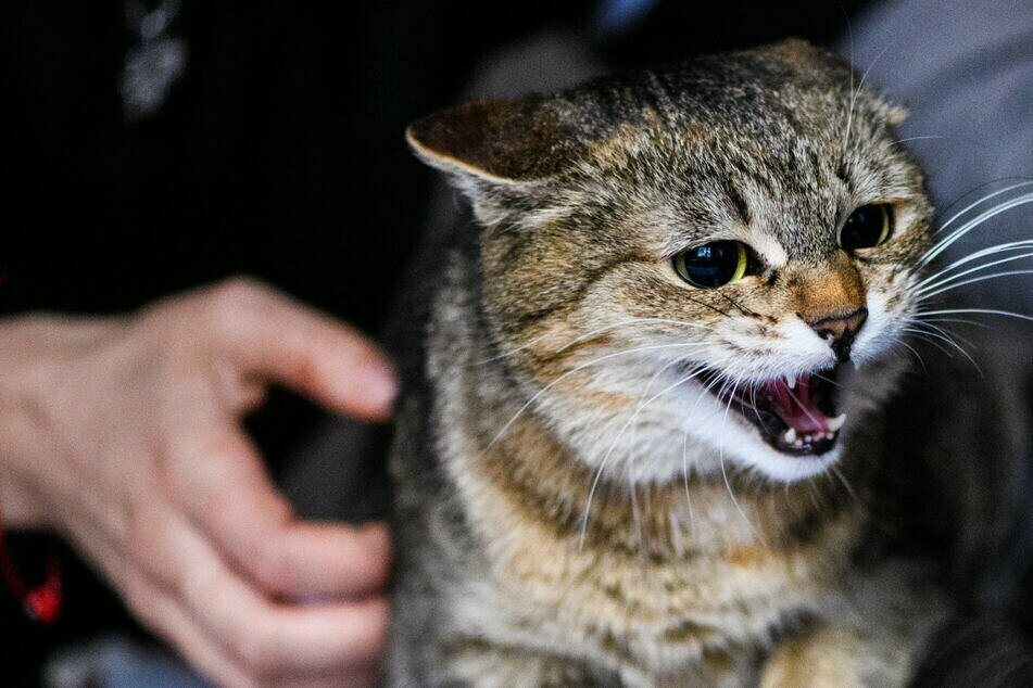 Katze gequält und verstümmelt! Halter hat Jugendliche im Verdacht