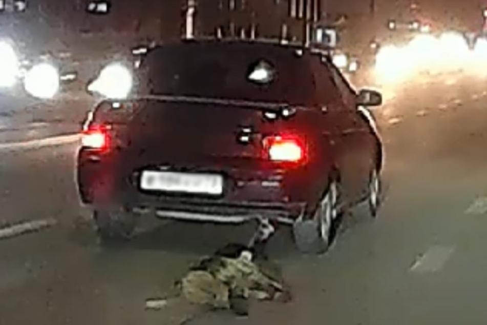 Dieser Anblick schockte Tierschützer und Autofahrer gleichermaßen.