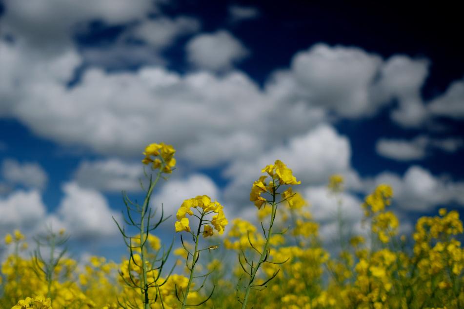 Ab Sonntag werden sich Sonne und Wolken durchsetzen...