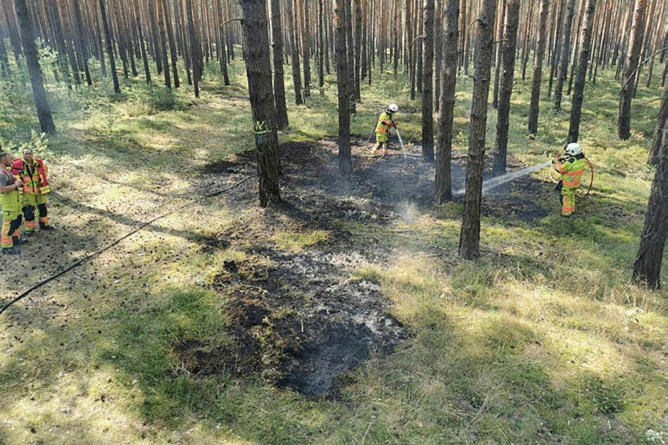 Glück gehabt: Dank der Feuerwehren Klitten und Uhyst konnte vor wenigen Tagen ein Waldbrand nahe des Bärwalder Sees gelöscht werden. Nun sinkt die Waldbrandgefahr wieder.