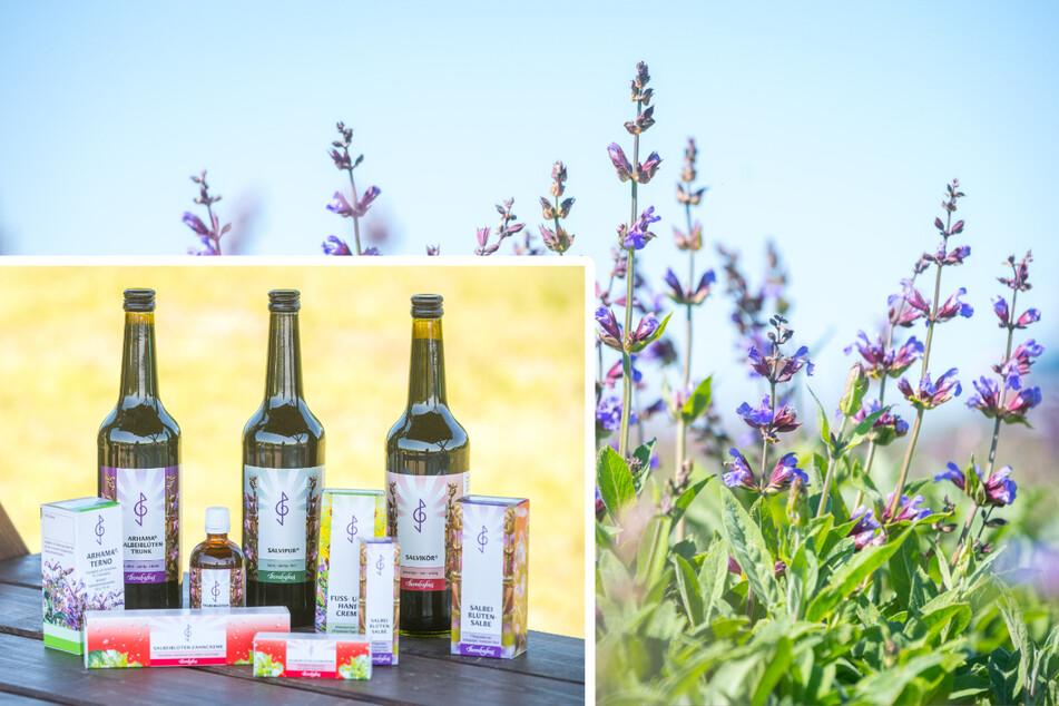 Die Bombastus-Werke AG produziert in Freital. Salbei-Produkte gehören zu den Evergreens in ihrem Sortiment.