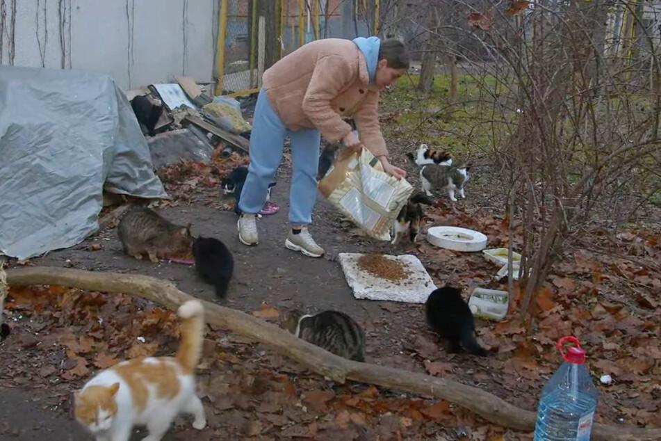 Die Tierschützerin fütterte zunächst streunende Katzen.