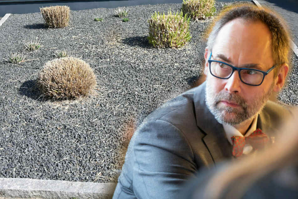 Staatssekretär: Neue Schottergärten auch in Thüringen verbieten