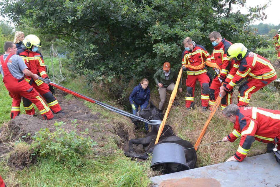 Hamburg: Pferd sitzt fest! Feuerwehr schwitzt bei Rettungseinsatz