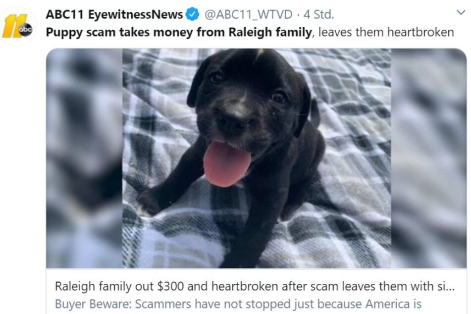 This poor puppy had to be put down only one day after it came to its new home.