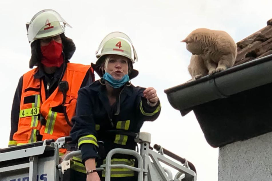 Total verängstigt: Feuerwehr muss süße Katze aus Regenrinne retten