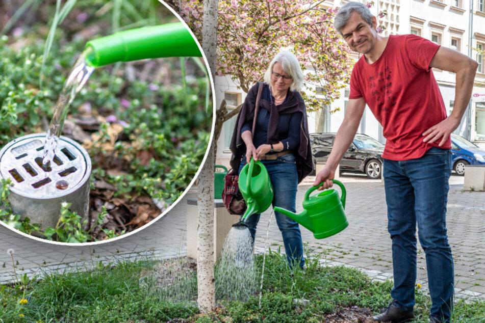 Chemnitzer Bäume trocknen langsam aus: Grüne fordern unterirdische Bewässerung