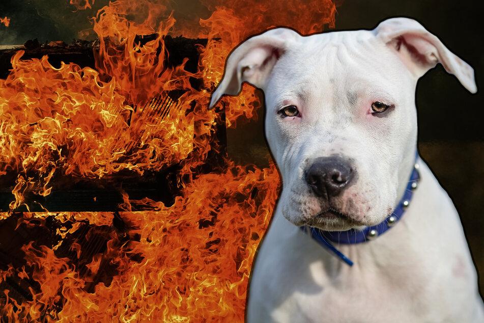 Der alte, taube Hund Sid bekam von dem Feuer nichts mit. (Symbolbild)