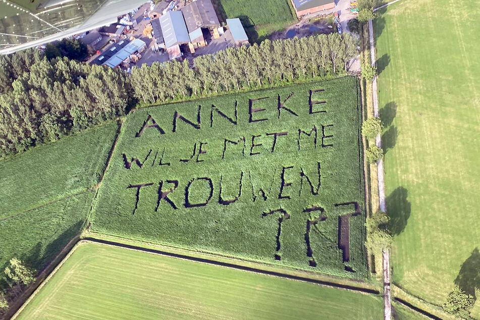 """Das Maisfeld mit dem Antrag: """"Anneke wil je met me trouwen???"""" (dt. Anneke willst du mich heiraten?)."""