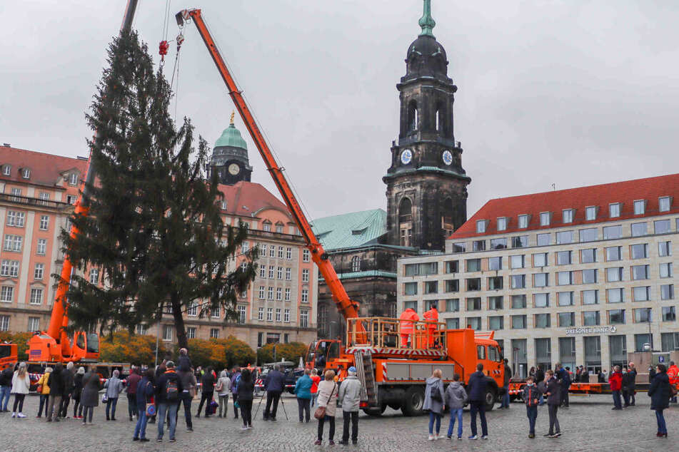 Dresden: Weihnachtliches Flair trotz Lockdown: Fichte wird auf dem Striezelmarkt aufgebaut