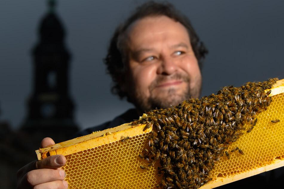 """Dresden: Bienenzüchter-Boom! Kommt jetzt der """"Imker-Führerschein""""?"""