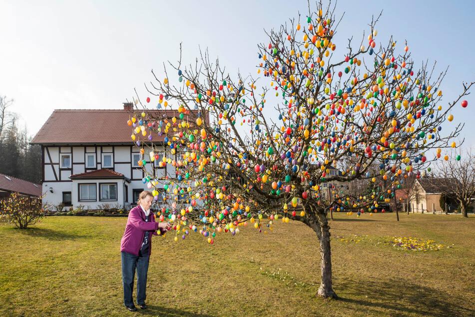 Wahrlich eine Attraktion: Sachsens buntester Osterbaum mit rund 1700 Eiern.