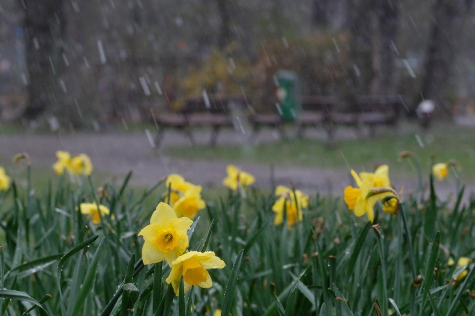 Wetter in NRW: Ungemütliche April-Achterbahn setzt sich fort