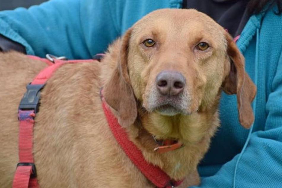 Hund Buddy litt an Herzwürmern und braucht Hilfe