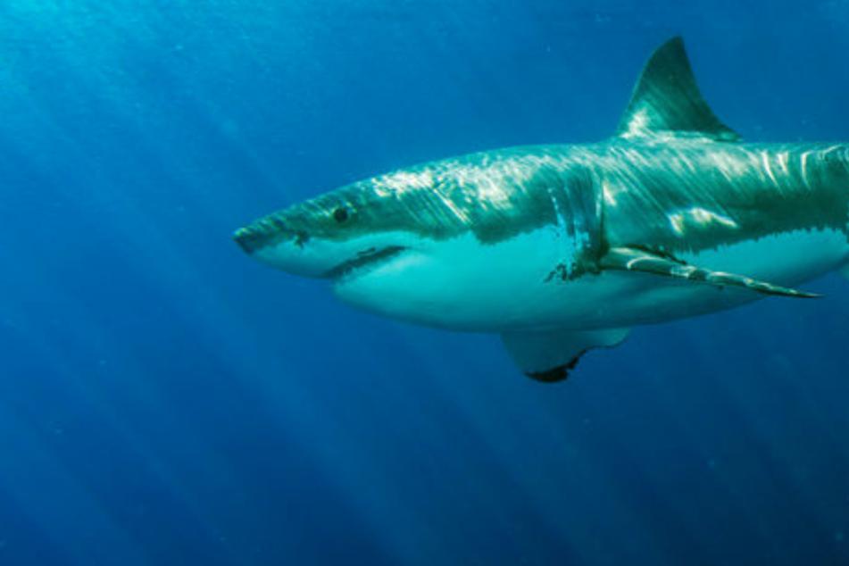 """Hai beißt 17-Jährigen ins Bein: """"Ich sah das ganze Blut im Wasser"""""""