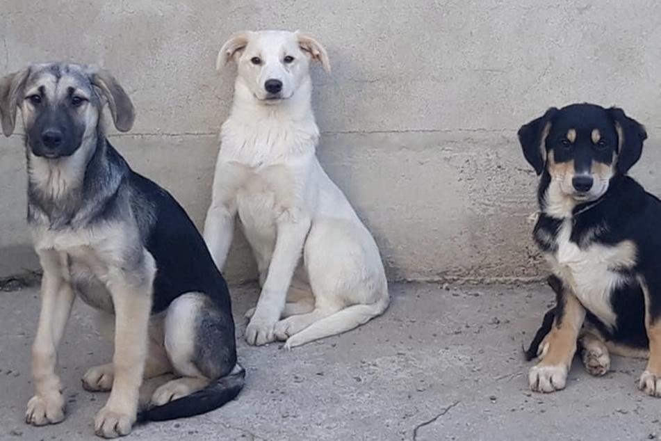 Gassigeher, Interessenten und Spender fallen weg: Tierheim in arger Not!