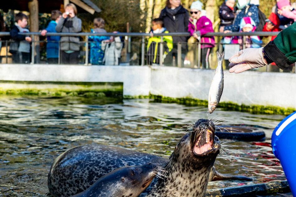 Tierpark wieder offen: Vormittags so viele Besucher wie sonst an einem ganzen Tag!