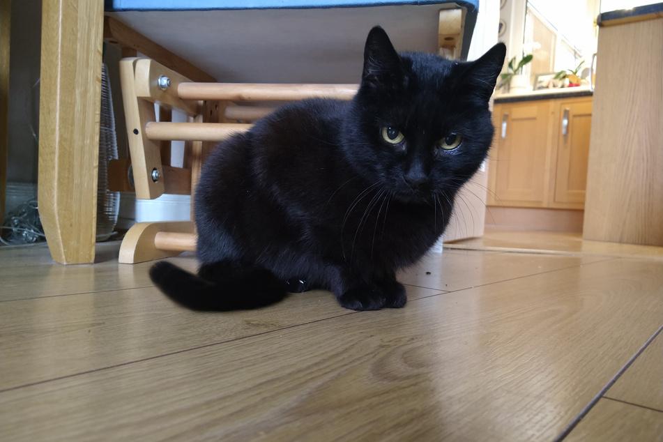 Vor fast vier Jahren verschwand die Katze Bella aus ihrem Zuhause in Dunfermline. Nun ist sie wieder mit ihrer Familie vereint.