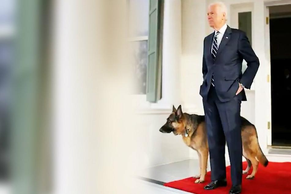 Joe Biden poses with one of his German shepherds.