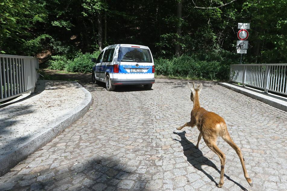 Schnurstracks flüchtete das Tier in den nahegelegenen Annapark von Meerane.
