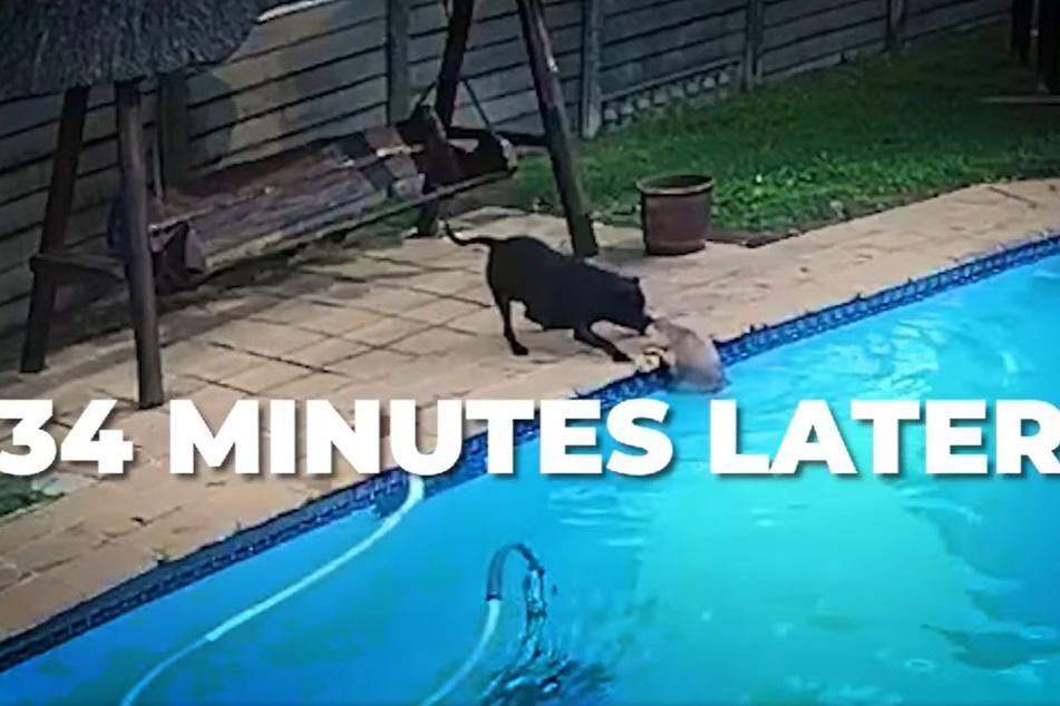 Circa 34 Minuten später gelang die Rettung von Chuck.