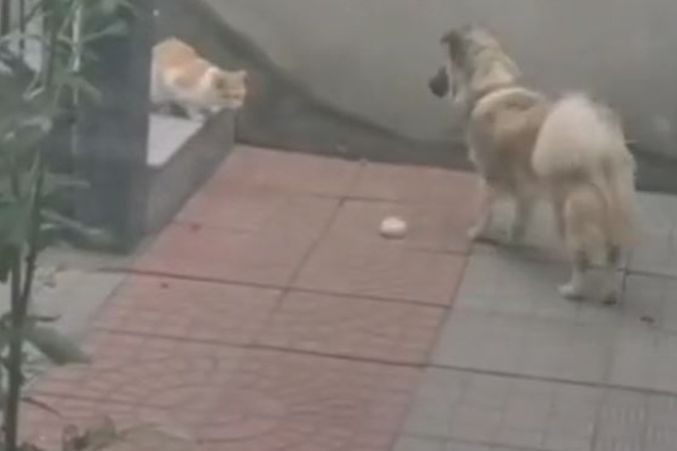 From Pudding with love: dog's sweet gift to stray cat goes viral