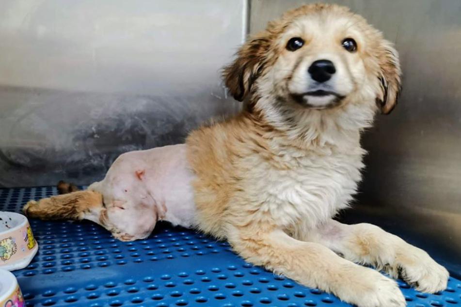 Hund lag mit gebrochenem Becken im Graben: Retter haben nun bittere Nachricht!