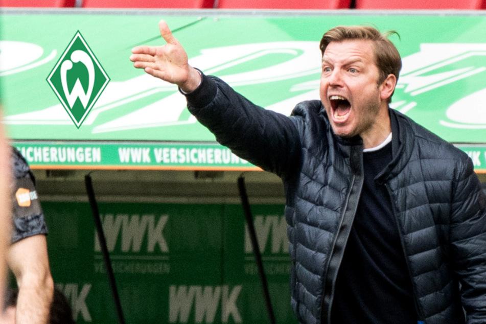 Trainer-Hammer in Bremen! Werder haut Kohfeldt doch noch raus, Schaaf übernimmt