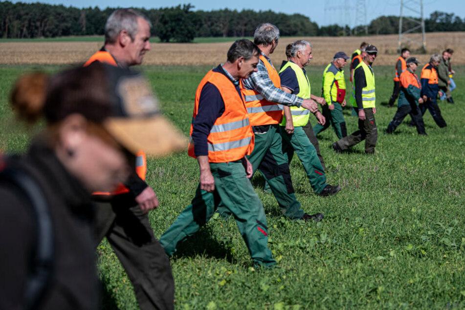 13 Schweinepest-Fälle bestätigt: Versagen im Kampf gegen Ausbreitung?