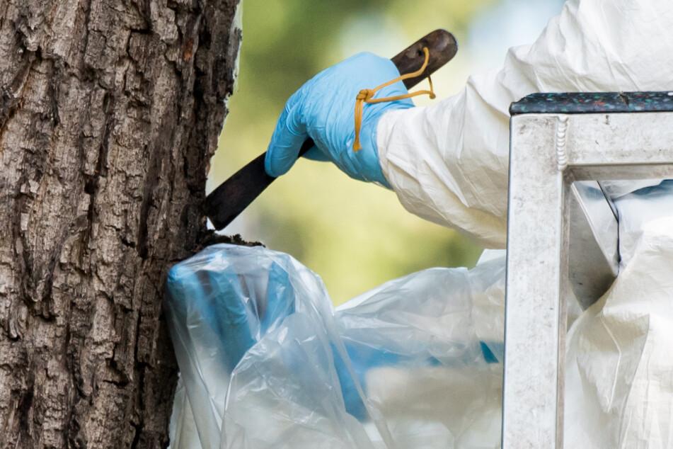 Ein Mitarbeiter einer Baumpflegefirma entfernt auf dem Ohlsdorfer Friedhof in einem Schutzanzug ein Eichenprozessionsspinner-Nest an einem Baum.
