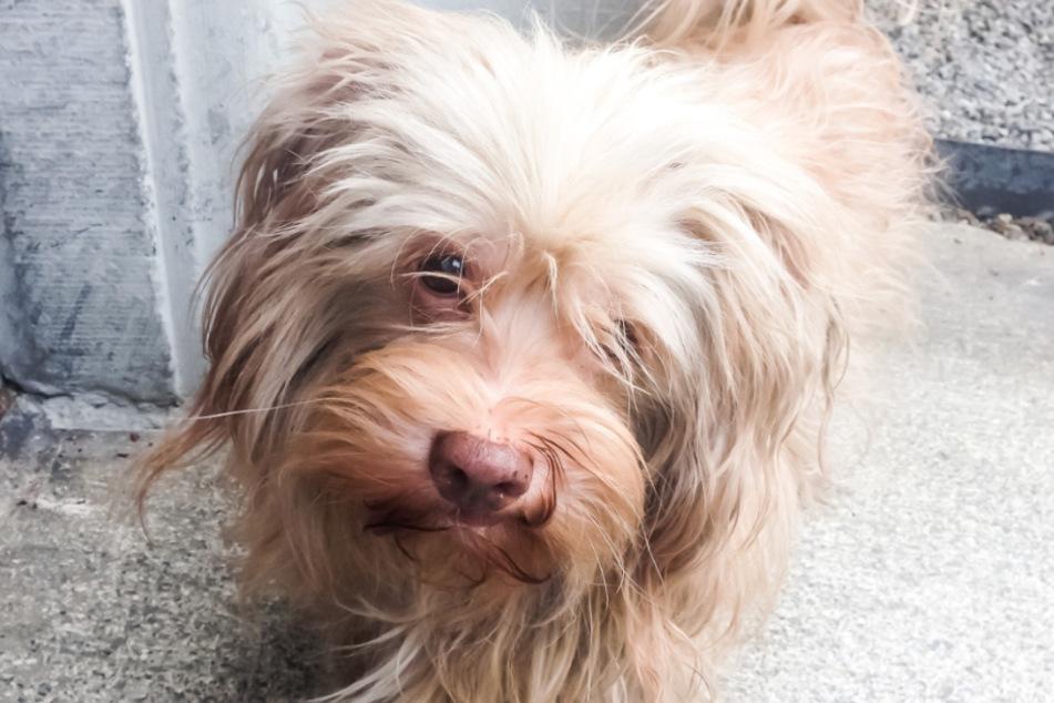 Hund Jack ist blind und wurde einfach vor dem Einkaufszentrum Zürich entführt.