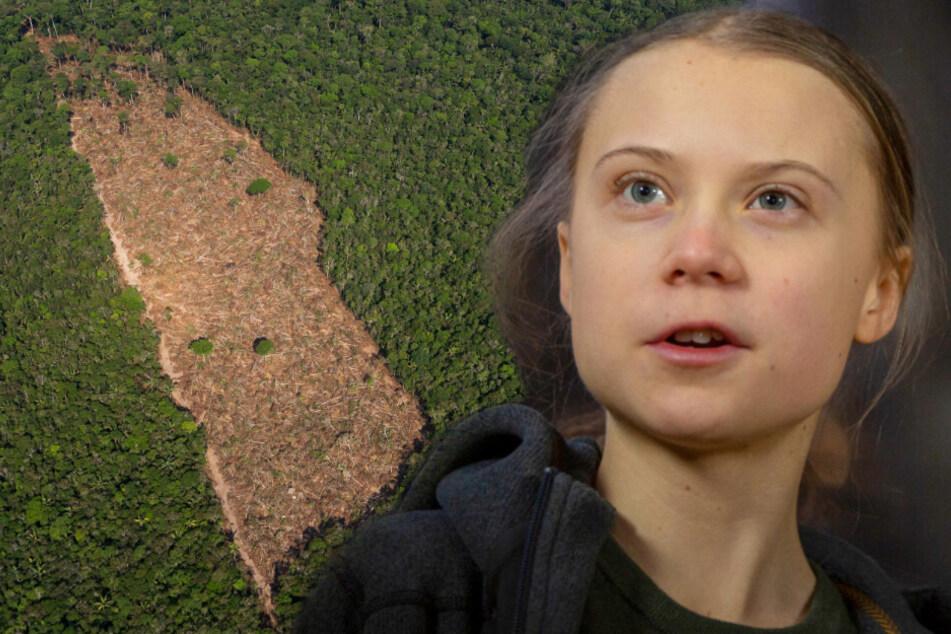 Abgeholzte Waldstücke im Amazonasgebiet sind laut Greta Thunberg und Wissenschaftlern eine von vielen Ursachen der Corona-Pandemie.
