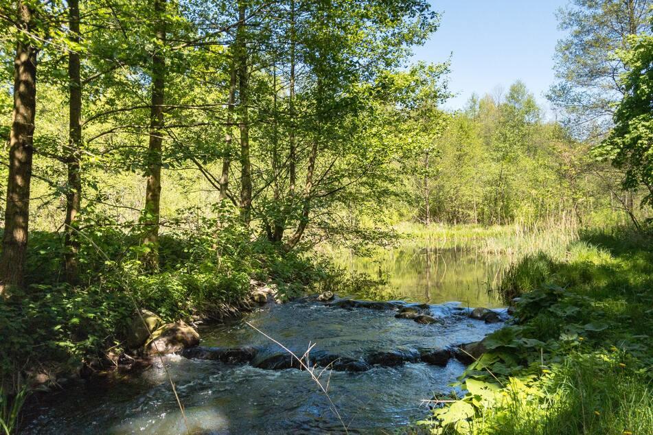 Ursprüngliche Natur, wie hier an der Löcknitz, findet man auf dem 66-Seen-Wanderweg, wohin das Auge reicht.