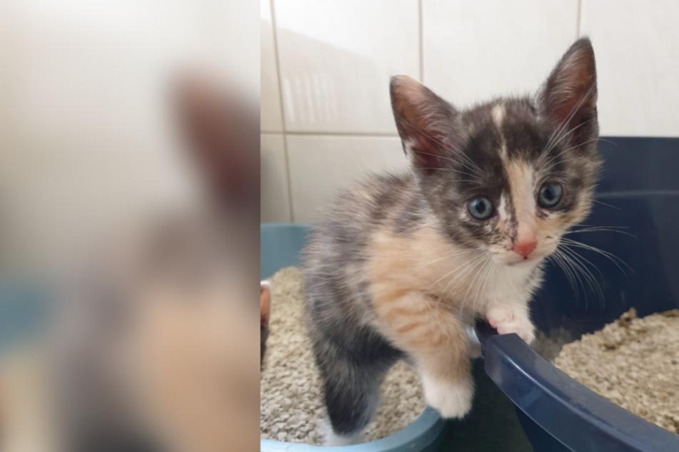 """Katzenklo, Katzenklo... Die richtige Toilette für das """"königliche Popöchen"""""""